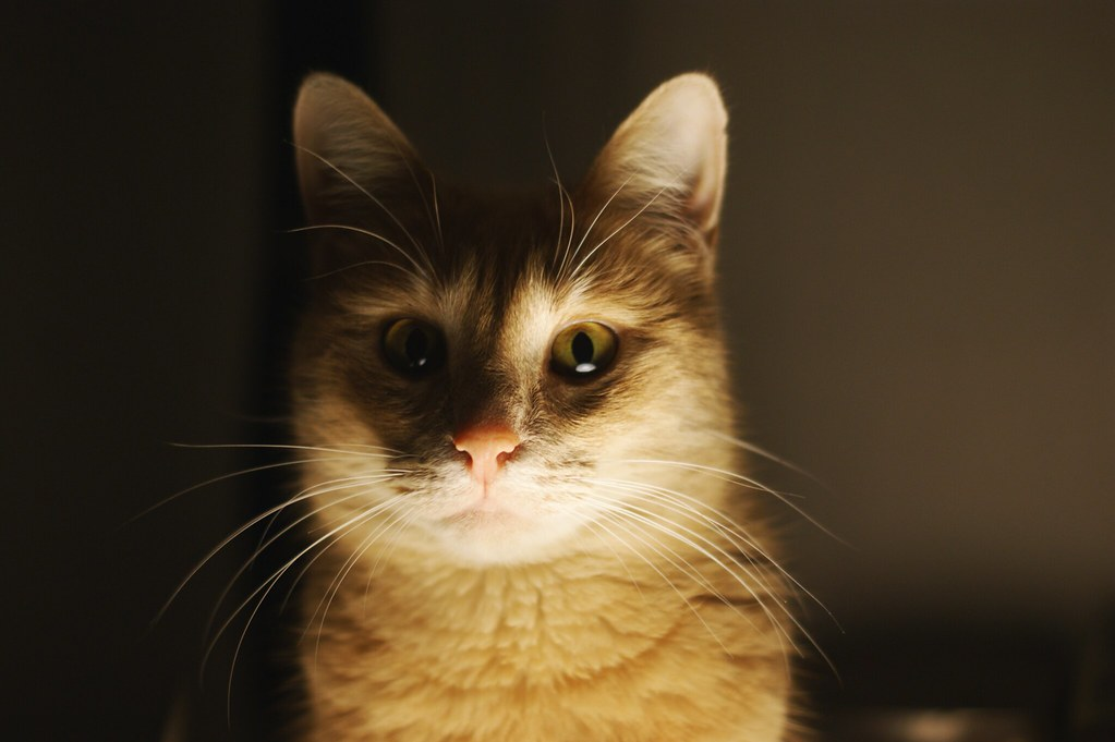 cat_2_emmaemilie