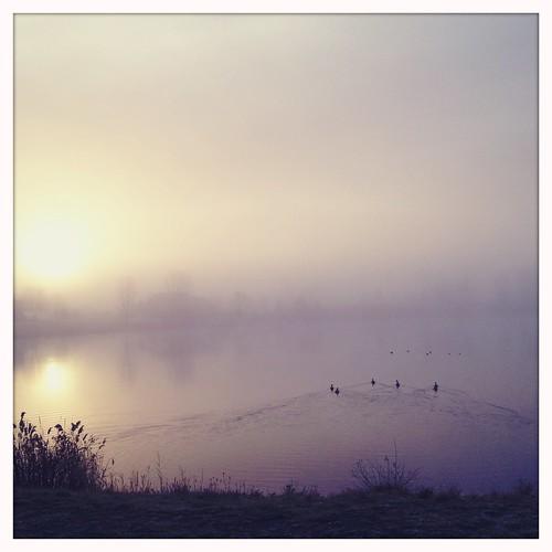 sunset lake fog ducks hazy helgaviking hipstamatic chasingfog blankonoir uploaded:by=flickrmobile flickriosapp:filter=nofilter