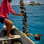 Livelihood in the Cook Islands