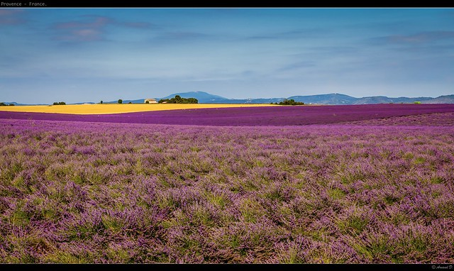 Valensole en Provence