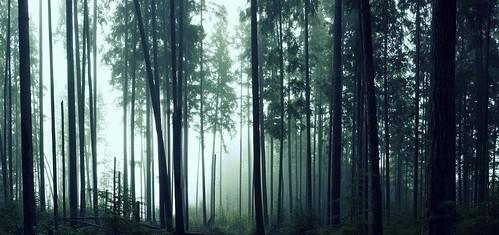 seattle trees nature fog trails redmond