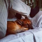 Menschliche Höhle für tierische Ruhe. #dog #hund #schlafen