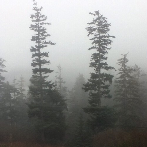 You haven't seen fog until you have lived in Kodiak. #foggedin #noplanesgettingintoday #kodiak #fog