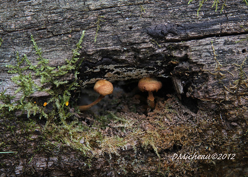mushroomstylz7d 007_edited-1