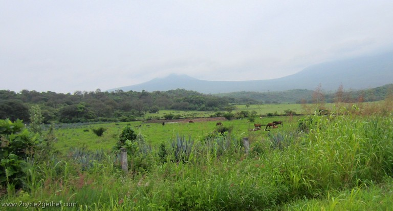Fields in Jalisco