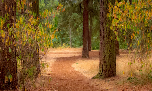 bushpark salemorgeon fall autumn fog trail bushspasturepark path salemoregon