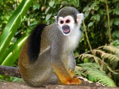 other Animals of Ecuador
