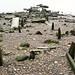 Artistic ruins by Convoys Wharf