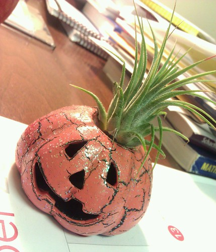 A little airplant jack-o-lantern for the teacher's (@divergentrealit) desk.