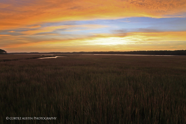 Chincoteague_Marsh_MG_0525