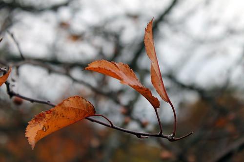 Morton Arboretum Autumn 2012