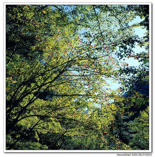 天涼好個秋 (底片版)