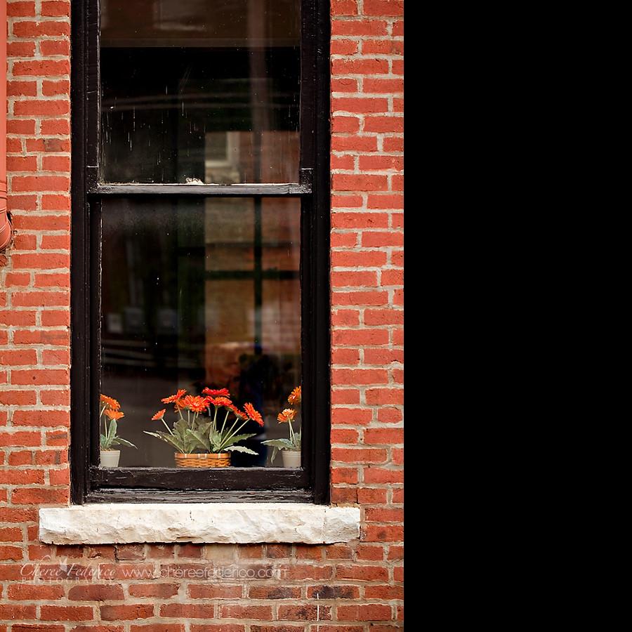 Window Trio Blog