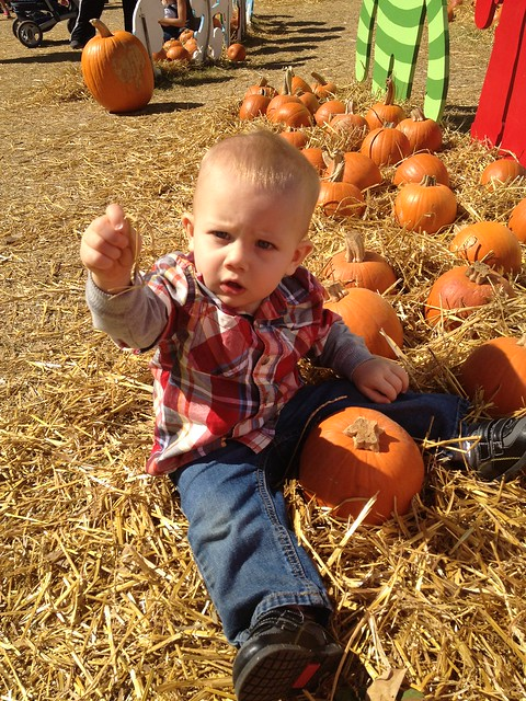 Ty & pumpkins