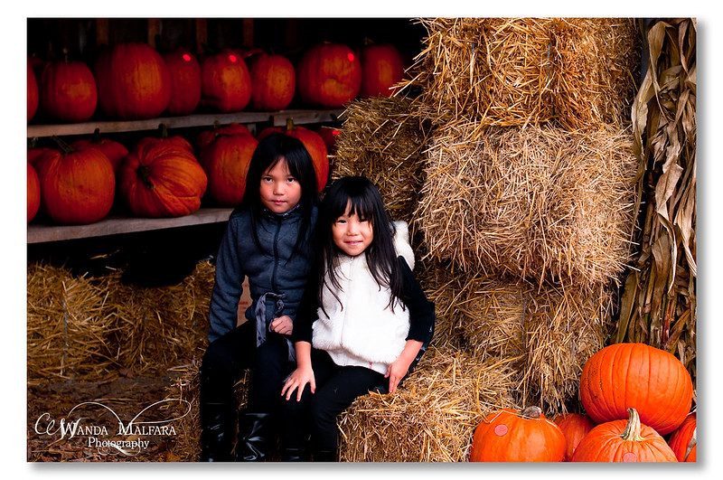 Pumpkin Patch 2012 027 wm