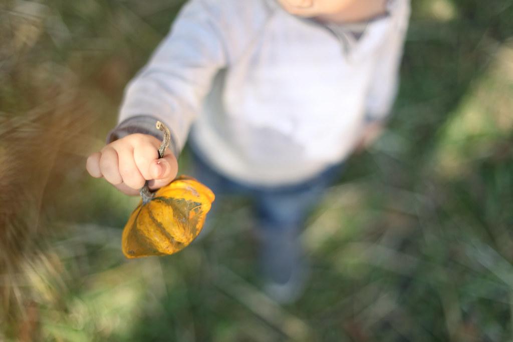 Pumpkins-22