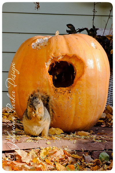 Squirrel-in-a-Pumpkin-5