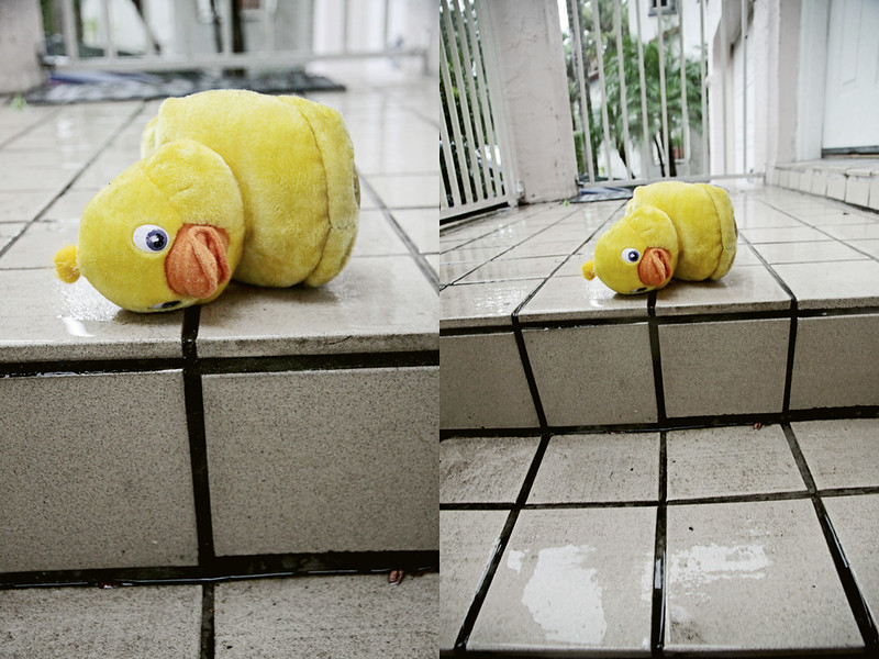 rainy duck diptych