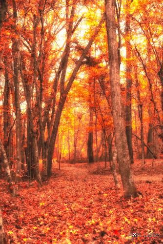 autumn trees fall leaves creek forest river landscape outdoors nikon stream warm raw outdoor north sigma northcarolina calm carolina 28 70200 edit 2012 d800 200mm rawedit dcimageforge dannycollado
