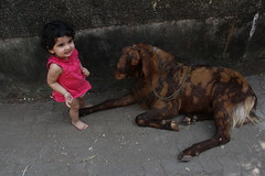 My Grand Daughter Nerjis Asif Shakir Respects Animals by firoze shakir photographerno1