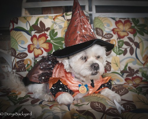 20121031-Halloween