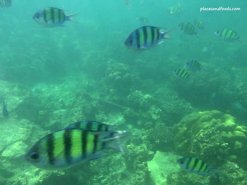 phi hin klang fish