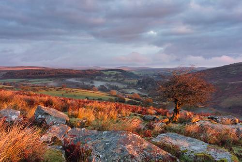 mist clouds sunrise landscape hills boulders valley ferns tor dartmoor dartmoornationalpark coombstone autumndartmoordartmoornationalnaturereservedevonfalllandscape