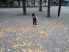 恵比寿公園で落ち葉ふみ (2012/11/3)