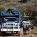 Rural traffic jams - Lon con un burro que quería escapar; entre La Paz y Guadalupe Hidalgo, Región Mixteca, Oaxaca, Mexico por Lon&Queta