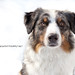 Jesse by Jenn W (Jenn Wilson Pet Portraiture)