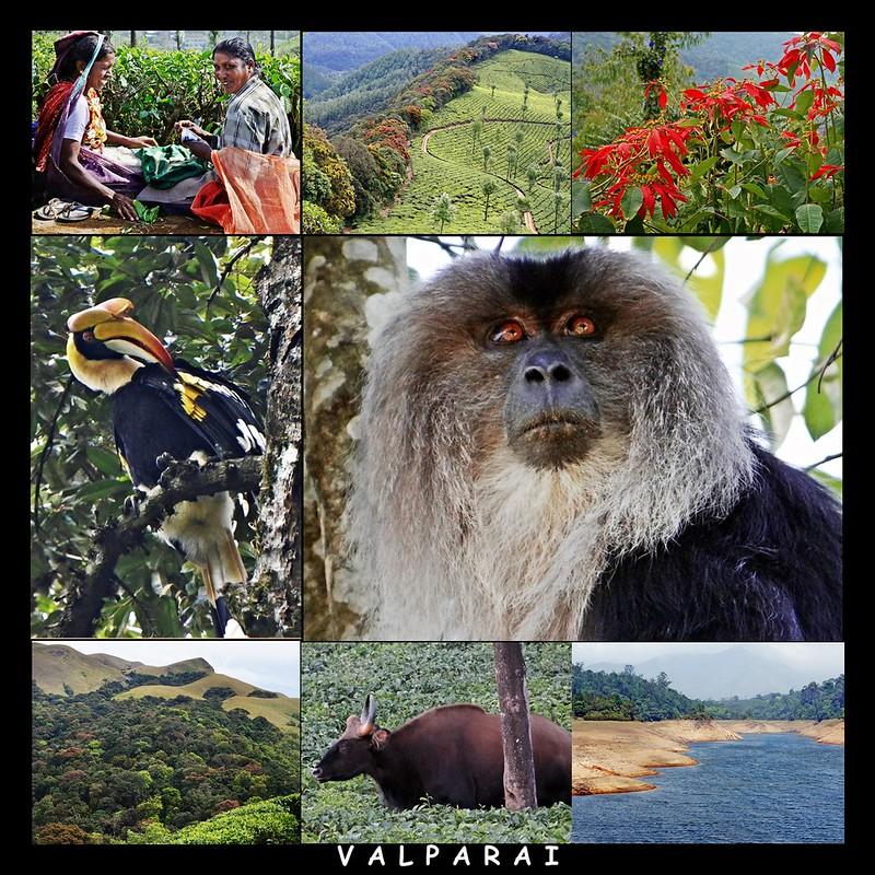 Valparai Series – Part 1: An Introduction