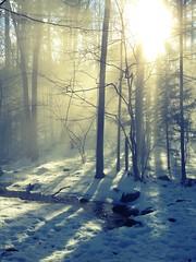 Warm foggy day at beaver brook