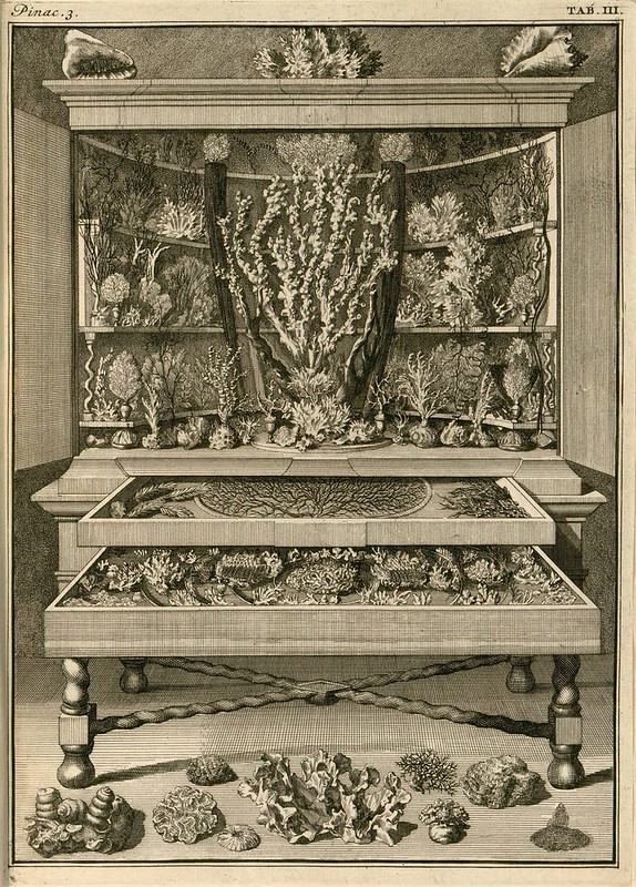 cabinet of curiosities - book engraving with coral species