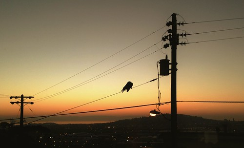 Bernal Birds