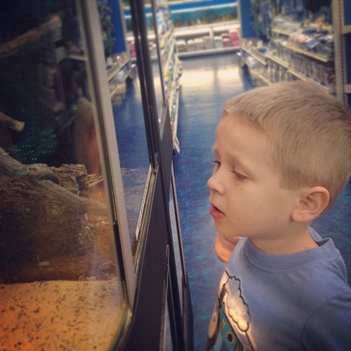 Checking out the snakes at Pet Supermarket.... Ewwwww!