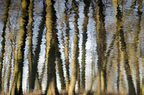 Tree ripple. (1)