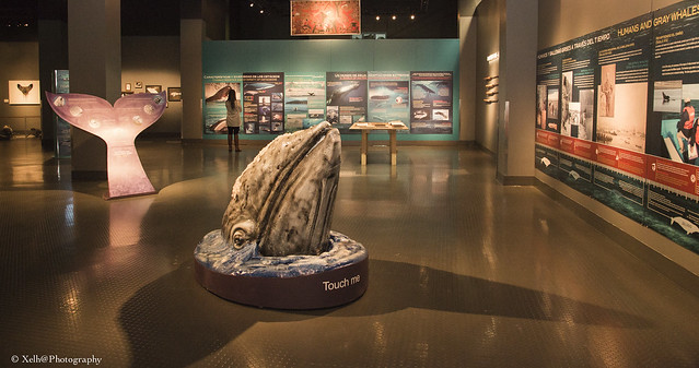 """Exhibición """"Travesía, migración de la ballena gris"""""""