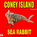 Coney Island brand exotic canned food - Sea Rabbit.  canned label