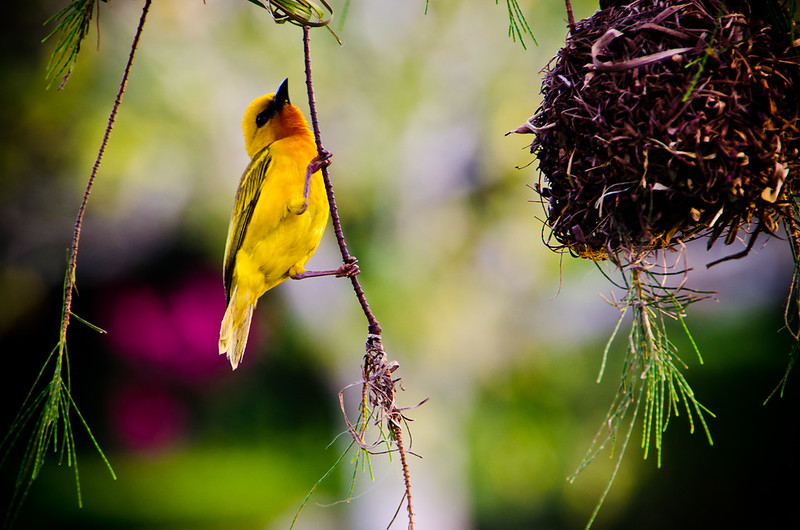 waver bird