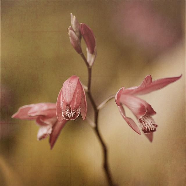 FloralWorx