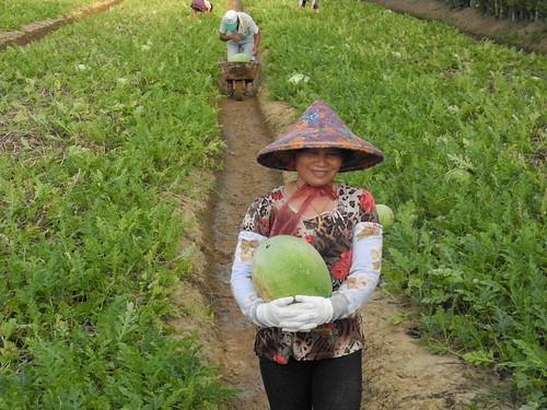 灣寶社區為了維持務農的生活,曾經歷多年反對科學園區設立的日子,只要能維護務農的生活,農民就能展開笑顏,也能餵飽我們社會。