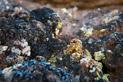 marine biology(0.0), food(0.0), underwater(0.0), reef(0.0), coral reef(1.0), coral(1.0), soil(1.0), nature(1.0), macro photography(1.0), tide pool(1.0), geology(1.0), close-up(1.0), rock(1.0), wildlife(1.0),