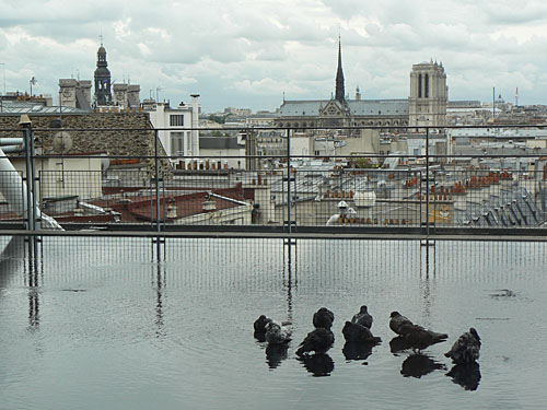bain des pigeons.jpg
