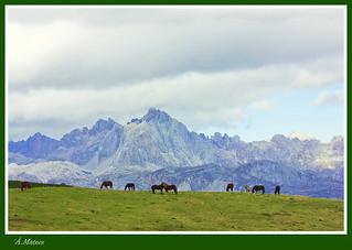 Paisaje -caballos-1