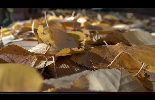 Autumns Litter