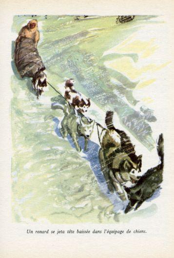 Au pays du renard blanc, by Olaf SWENSON -image-50-150