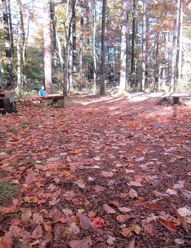 落ち葉の絨毯 2012年10月24日7:41 by Poran111
