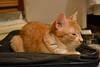 Miau y la maleta [1]