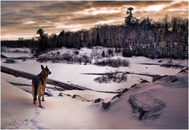 Iggi at Chippewa Falls by Melissa Connors, Ontario, Canada
