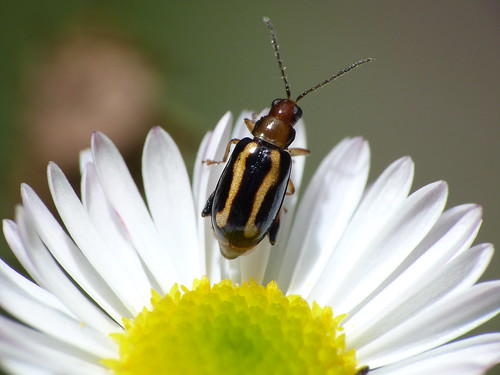 Bug - Insecto